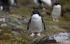 Environmentally Friendly; How to Become a Penguin's Best Friend